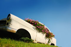 Eco friendly Car. Discarded Oldtimer covered with Flowers Royalty Free Stock Images