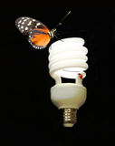 An eco-friendly CFL Bulb with butterfly & lady bug. A lit eco-friendly CFL light bulb with a butterfly and lady bug on it Royalty Free Stock Images