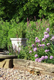 Eco-friendly country garden. Blooming chives on the terrace in rustic, country garden. Ecofriendly cultivation Royalty Free Stock Photography