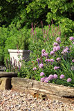 Eco-friendly country garden. Blooming chives on the terrace in rustic, country garden. Ecofriendly cultivation Stock Image