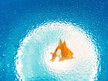 Eco-friendly Energy Source. Environmental Protection Goldfish Royalty Free Stock Image