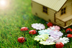 Eco friendly house. Concept of eco friendly house with ladybirds and flowers on green grass Stock Photos