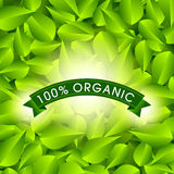 Eco Friendly label. Green leaves.  illustration. Royalty Free Stock Images