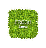 Eco Friendly Label Made in Green Leaves Royalty Free Stock Image