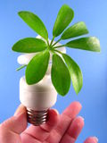 Eco-Friendly Lightbulb Stock Photo