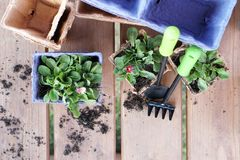 Eco-friendly pots for seedlings. Paper pots with flowers. Plant transportation. Flat lay stock image