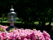 Eco-Friendly Street Light in Rose Bush. A fluorescent eco-friendly lamp in a residential street light inside a rose bush Royalty Free Stock Photo