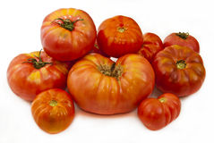 Eco-friendly tomatoes. Royalty Free Stock Image