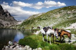Horseback tour in the mountains stock images