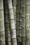 Eco-Friendly Tropical Bamboo Trees Full Frame Vertical Background Stock Images
