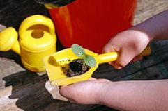 Eco-gardening with children. Kid's hands hold a yellow plastic shovel with a small green plant, a small yellow watering-can and a red plastic bucket are on a Stock Photos
