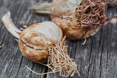 Eco garlic. On old wooden table Royalty Free Stock Photo