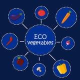 Eco-Gemüse Gesundes Lebensmittel infographic Gemüseplakat in der flachen Art Vektorillustrationshippie-Konzept, kann sein lizenzfreie abbildung