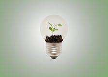 Eco Glühlampe Stockfotografie