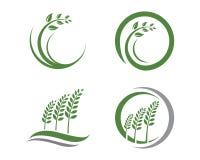 Eco gräsplan Arkivfoton