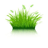 Eco Grass Stock Images