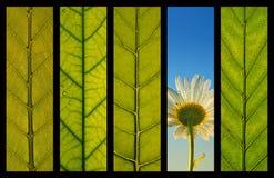Eco green concept. Eco Green Environmental concept – five elements collage Stock Photography