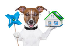 Eco energy dog. Eco green energy dog with mill and house Stock Images