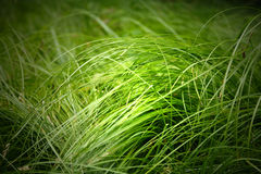 Eco green grass Royalty Free Stock Image