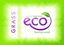 Eco green grass background Stock Images
