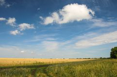 Beautiful green sunny rural landscape with trees and clouds Stock Images