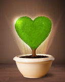 Eco heart tree coming out from flowerpot. Glowing eco love tree coming out from flowerpot stock photography