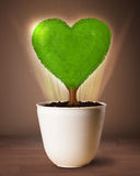 Eco heart tree coming out from flowerpot Stock Images