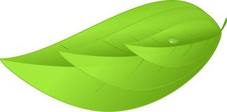 Eco icon green three leaves natural illustration Stock Images