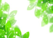 Eco image. Eco concept image of a leaves shining Stock Photography