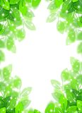 Eco image. Eco concept image of a leaves shining Royalty Free Stock Image