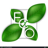 Eco the inscription of the leaves. Leaves design elements. Eco style. Green sprout green leaves symbol. Leafs background for your project. Ecological theme Stock Photography