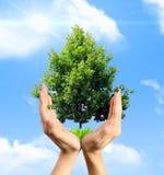 Eco Konzept Stockfotografie