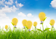 Eco Konzept - Glühlampe wachsen im Gras Lizenzfreie Stockfotografie