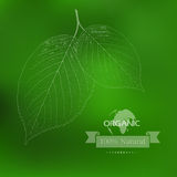 Eco label of Organic Standart. Concept. Royalty Free Stock Image