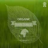 Eco label of Organic Standart. Concept. Stock Images