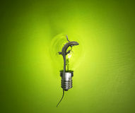 Eco Lamp Royalty Free Stock Photography
