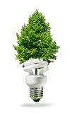 Eco lamp and tree Stock Photography