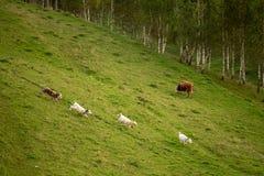 Eco lantbruk i landssida på flyg- sikt för rumänska berg från surret royaltyfri fotografi