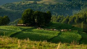 Eco lantbruk i landssida på rumänska berg fotografering för bildbyråer