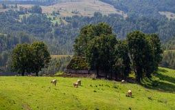 Eco lantbruk i landssida på rumänska berg royaltyfria bilder