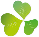 Lucky three leaves clover Stock Images