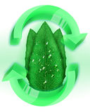 Eco Leafs with Water Droplets Stock Images
