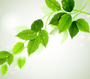Eco leaves Stock Images