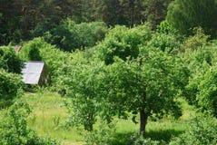 Eco-leeft in groene aard Royalty-vrije Stock Afbeeldingen