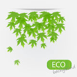 Eco leves background. Royalty Free Stock Photography