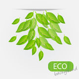 Eco leves background. Stock Photos