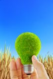 Eco light blub in hand. Light blub in hand, eco energy concept Royalty Free Stock Image