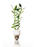 Eco light bulb with bamboo Royalty Free Stock Photo