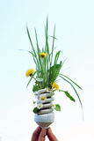 Eco Light Bulb With Flowers Royalty Free Stock Photos