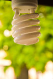 Eco light bulb Royalty Free Stock Image